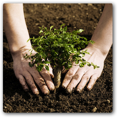 Plant A Church Photo